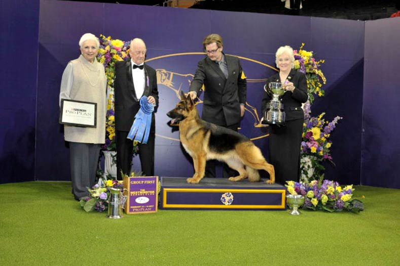 German Shepherd Winner From  National Dog Show