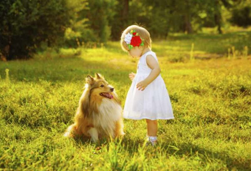 Young girl standing with Sheltie in sun-filled meadow