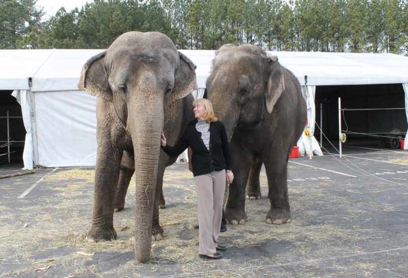 Woman standing in front of two elephants