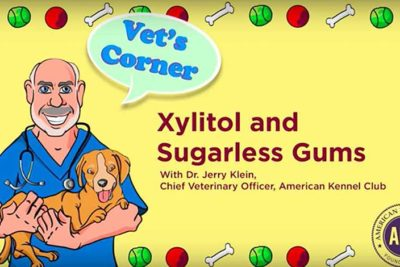 Xylitol In Sugarless Gum Is Dangerous for Dogs