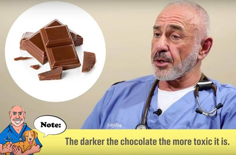 chocolate poisoning in dogs akc vets corner