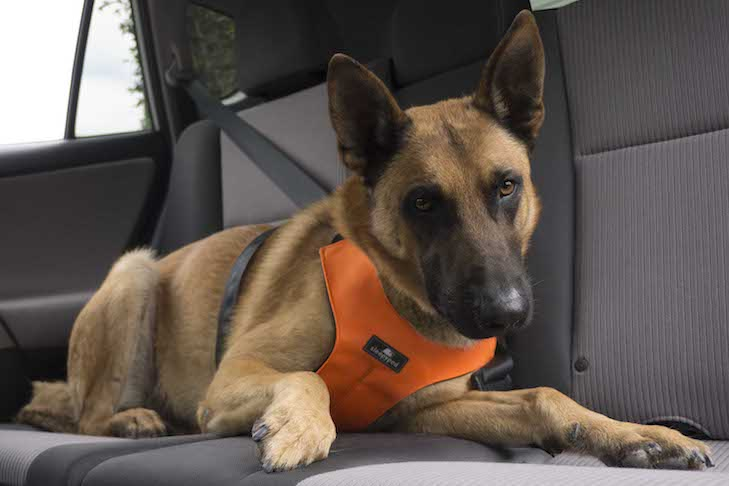 Dog Anxiety in Car Rides: How to Relieve Dog Stress