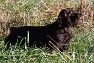 hunting dog names hero
