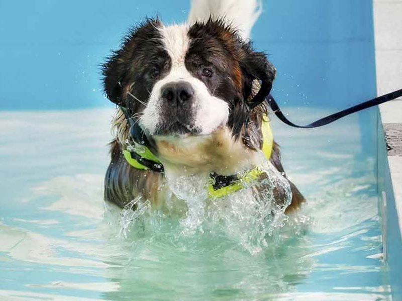 Swimming Lessons and Your Dog