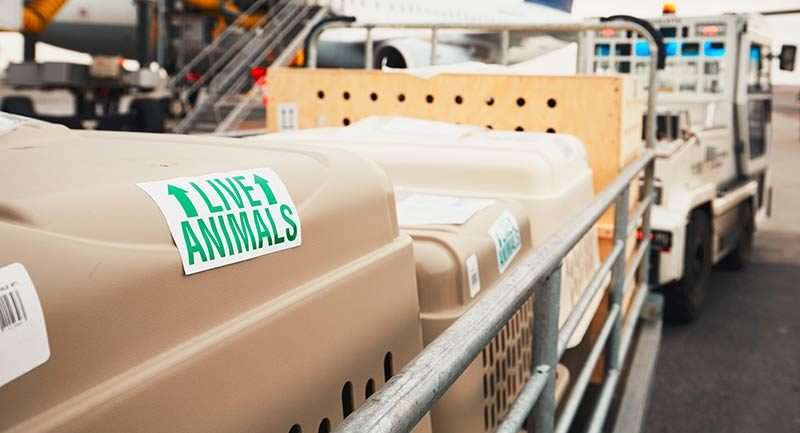 Live Animals cargo at the airport