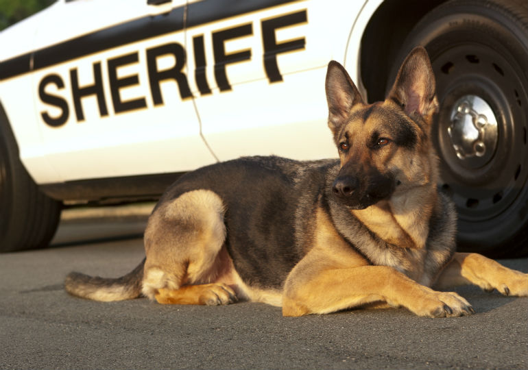 What Do Police Dogs Do American Kennel Club