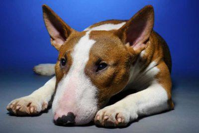 what to do if dog eats chicken bone hero