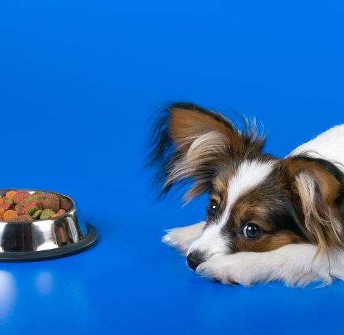 Why Won T My Dog Eat Learn About Reasons Why Your Dog Isn T Eating,Office Window Curtains Types