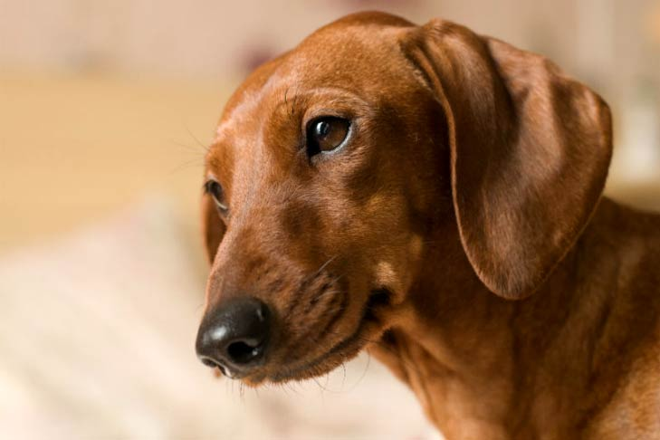 Should You Pay Pet Rent? – American Kennel Club