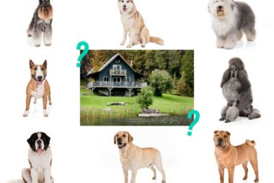 match the dog to the home quiz