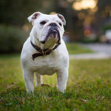 Products & Services – American Kennel Club