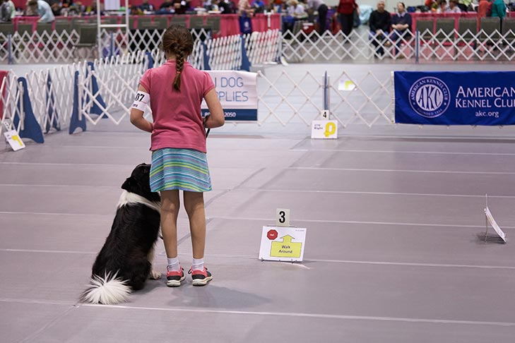 2018 Juniors Classic Obedience and Rally, Orlando, FL.