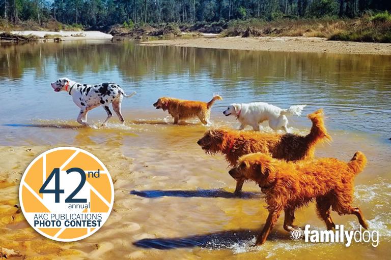 AKC 0 Pet Photo Contest
