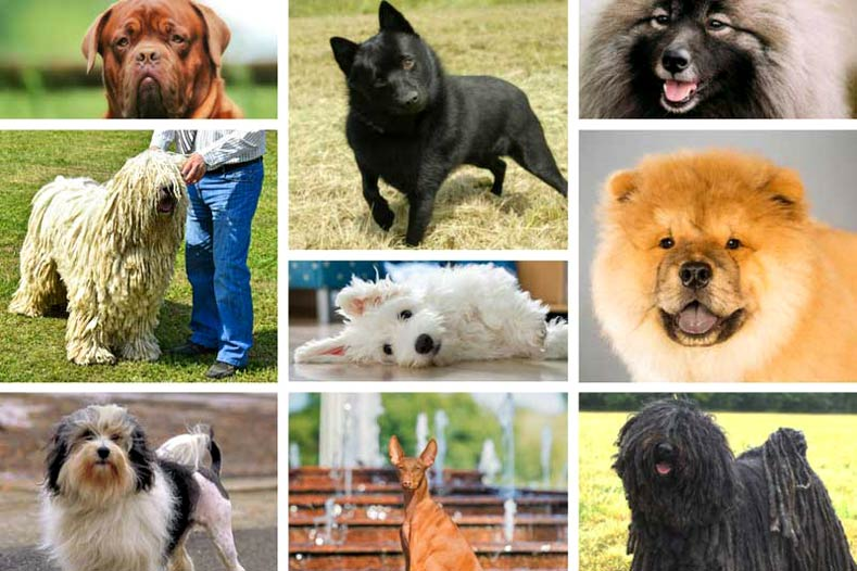 Dog Breed Name Plurals