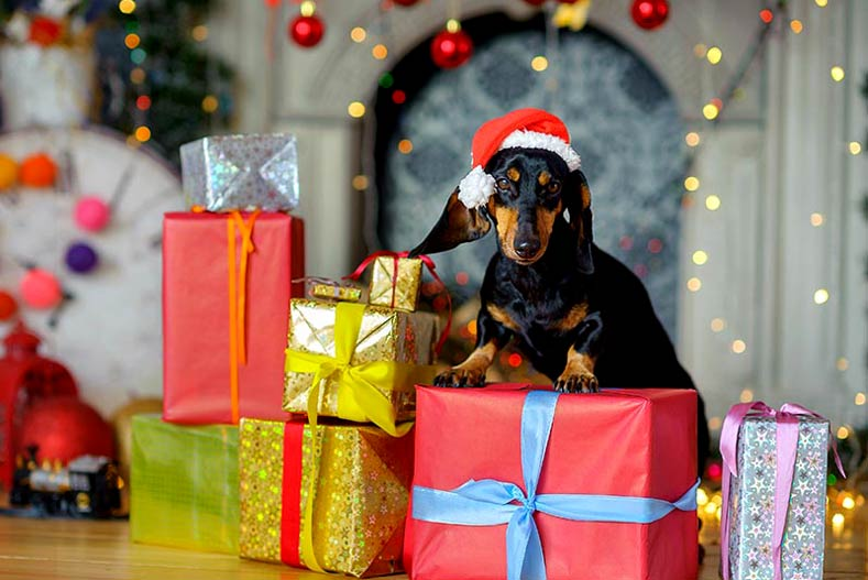 unique holiday gifts for dog lovers