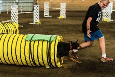 25 dogs doing agility hero