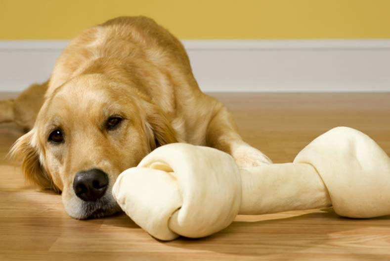 Image result for dogs and rawhide