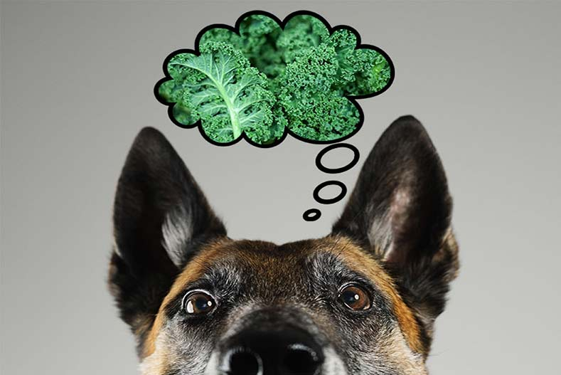 9457f66d4c9b Can Dogs Eat Kale?