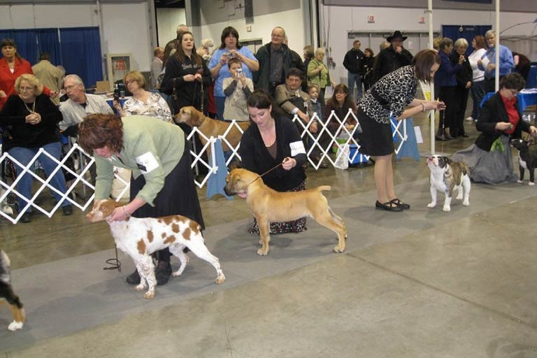 Puppy of Achievement – American Kennel Club