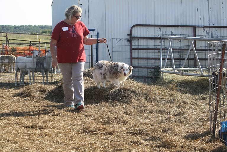 farm dog test