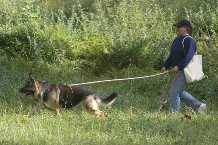 Tracking American Kennel Club