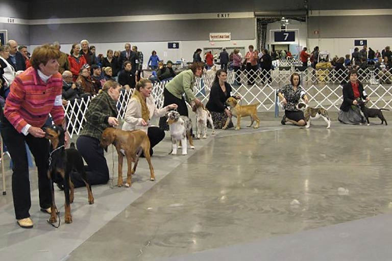 4-6 Month Beginner Puppy Competition – American Kennel Club