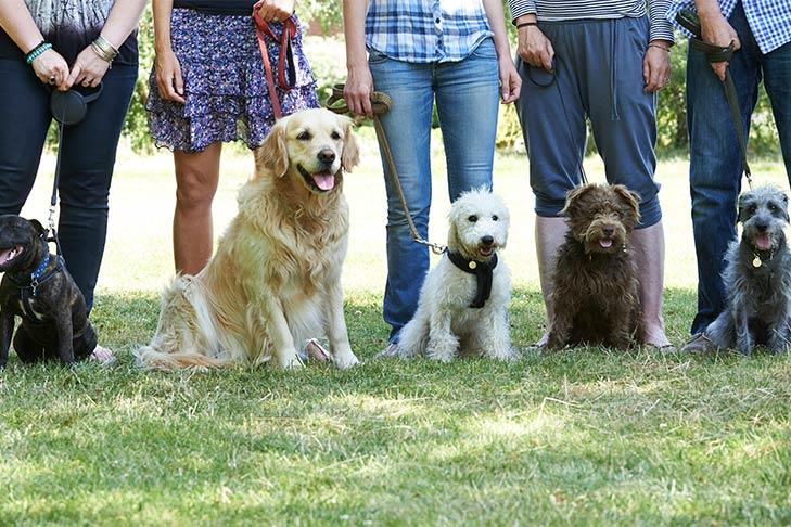Canine Good Citizen (CGC) – American Kennel Club