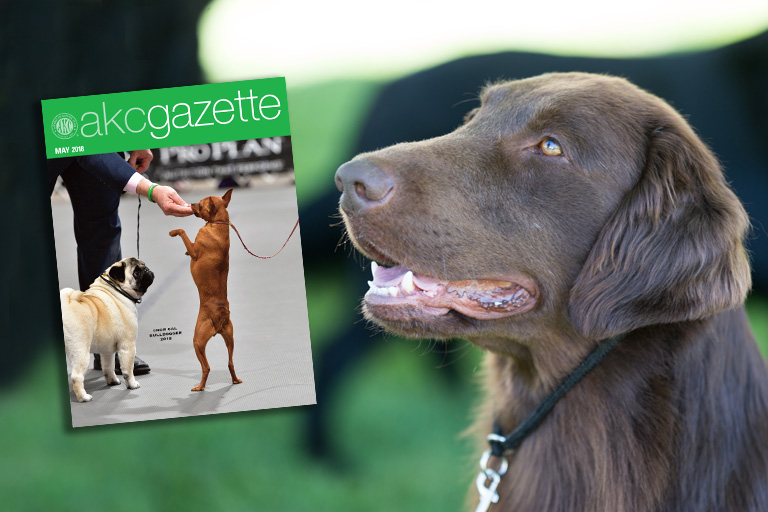 April 2018 AKC Gazette hero