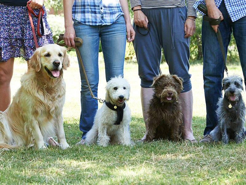 Obedience class of dogs and their owners.