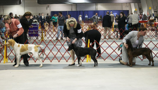 Fss Open Show American Kennel Club