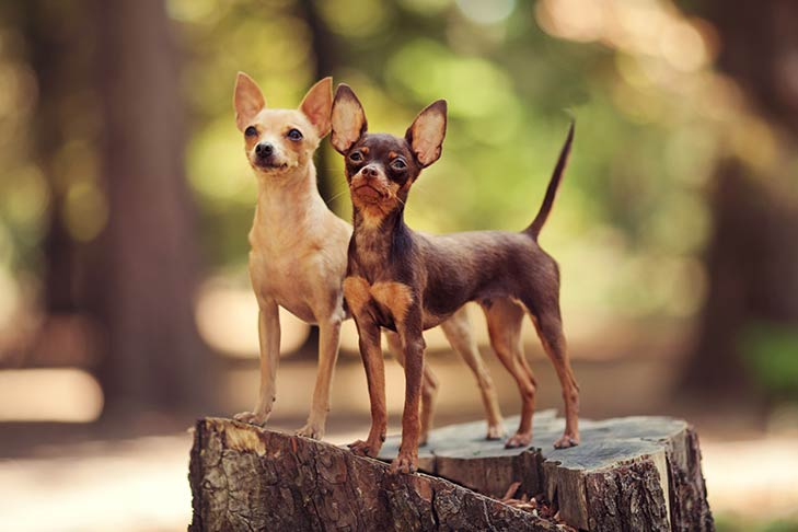 Two Russian Toys standing on a tree stump outdoors.