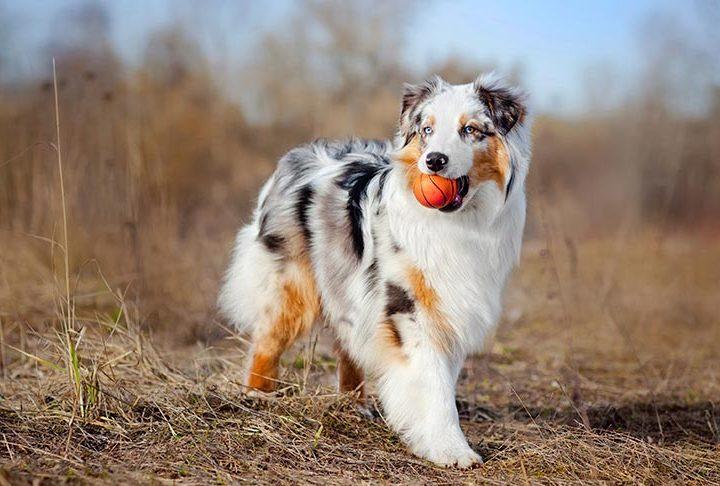 doggie dating citas para perros