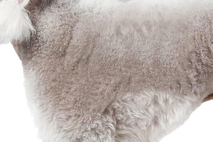 Bedlington Terrier coat detail.