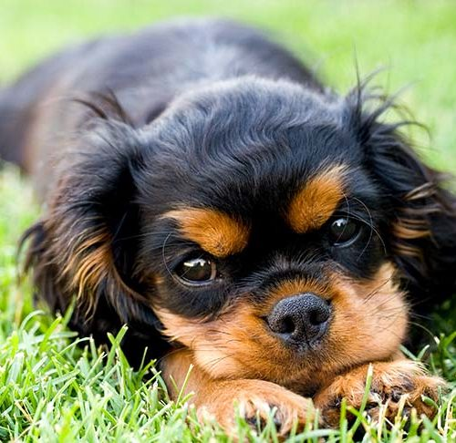 Lyme Disease In Dogs Symptoms Testing Treatment And Prevention