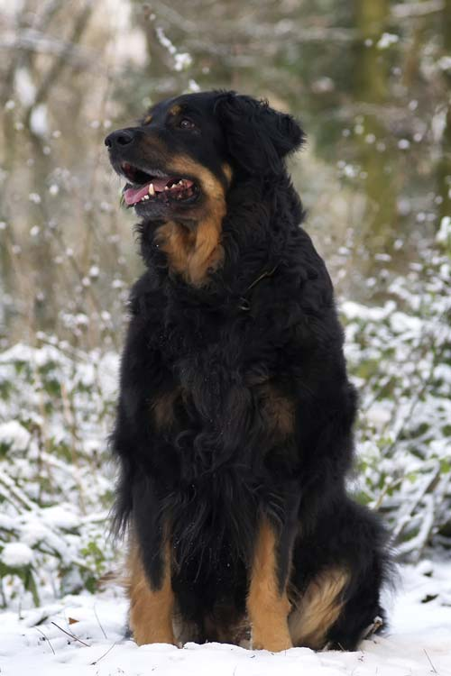 When Can Dogs Breed At What Age