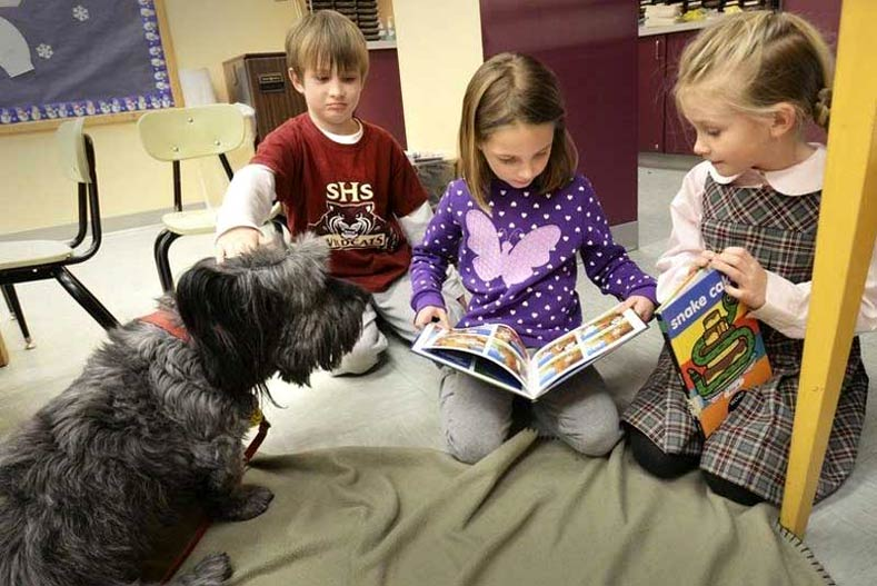 Skye Terrier Mr. Dennis in a classroom with children