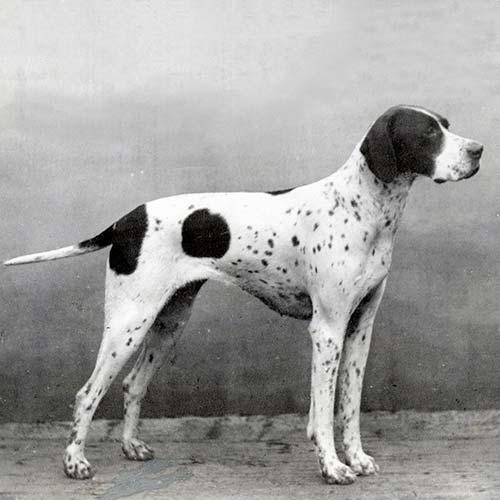 Kennel Club England Dog Breeds
