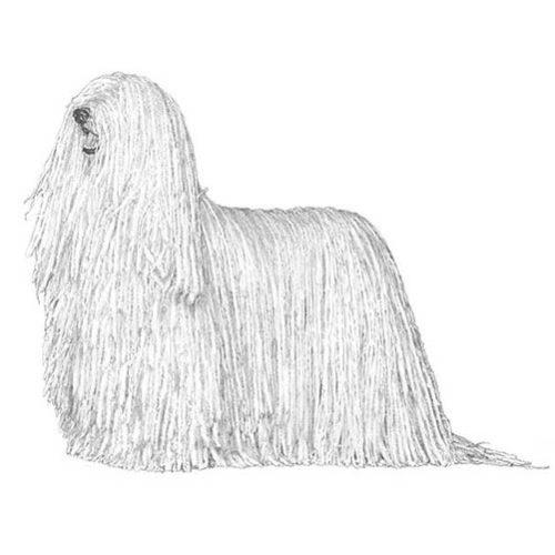 Komondor Dog Breed Information