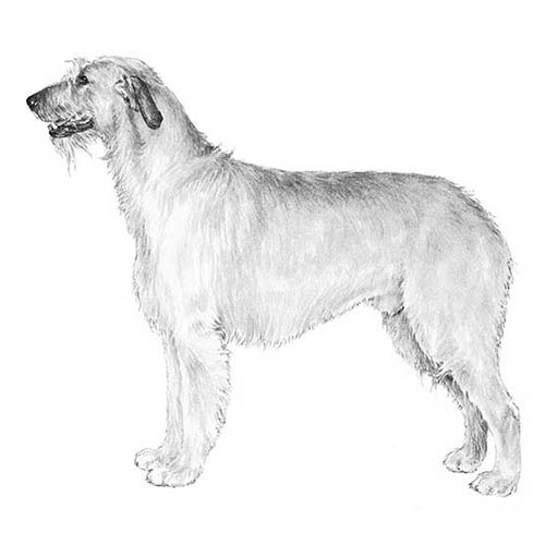 Dog Breed With The Underjaw