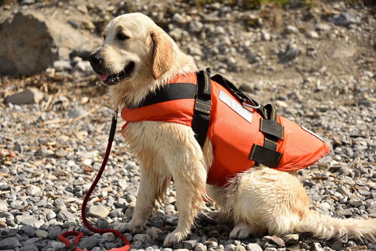 Search and Rescue – American Kennel Club