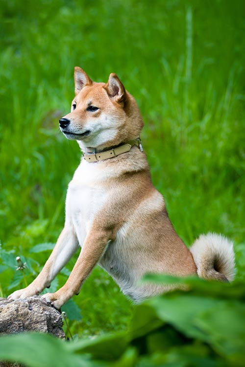 Pics Of Dog Breeds That Don