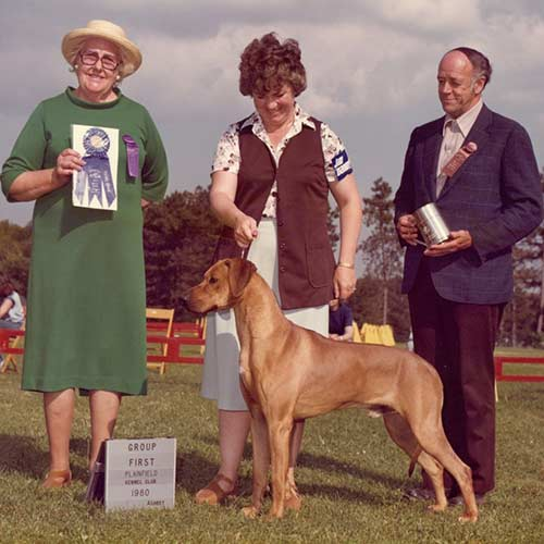Rhodesian Ridgeback Dog Breed Information