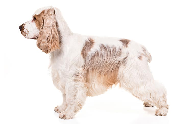 British Dog Breeds List