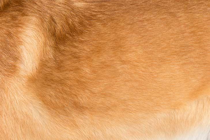 Chinook coat detail