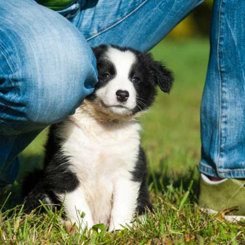 7 Tips For Finding And Working With A Responsible Breeder