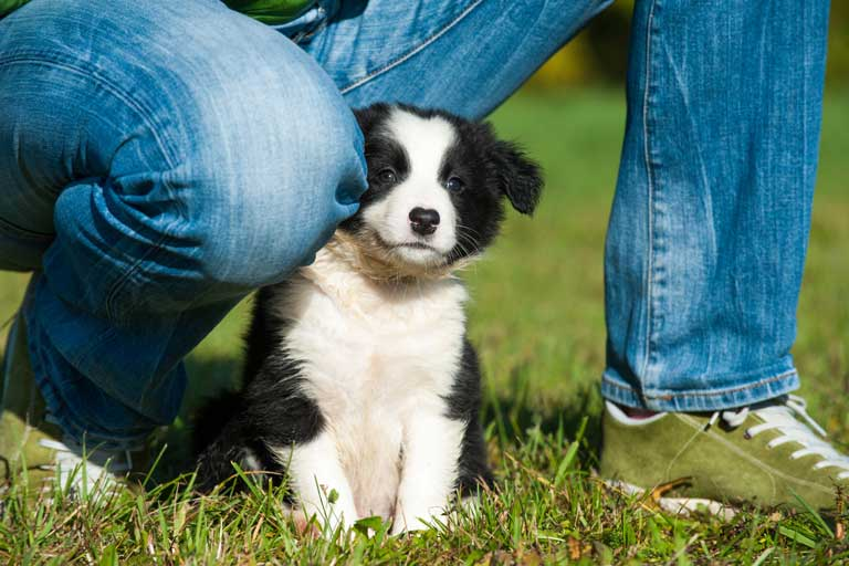9 Tips for Finding and Working With a Responsible Breeder