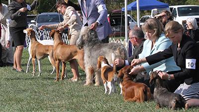 hound group hero