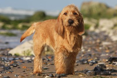 15 Of The Best Dogs For Kids Petfinder