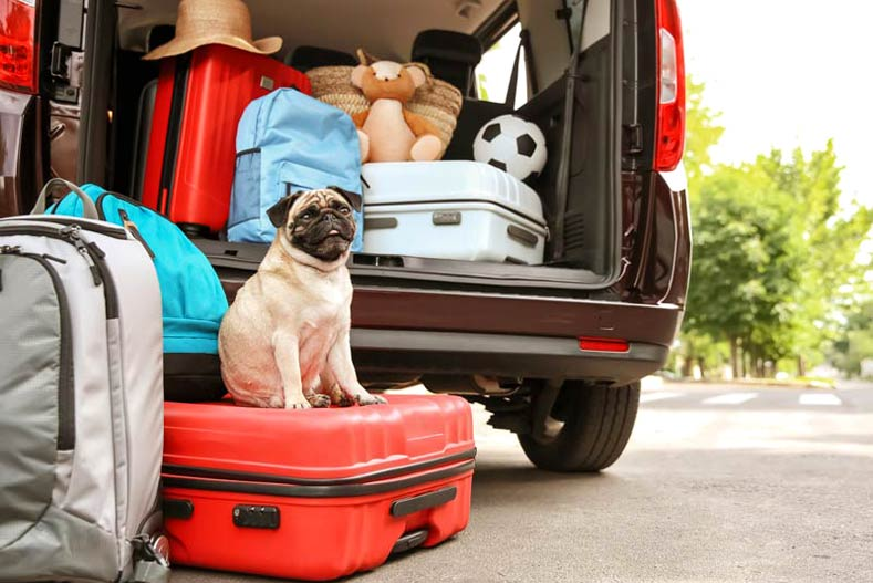 Pug sitting on a suitcase next to a half-packed car.