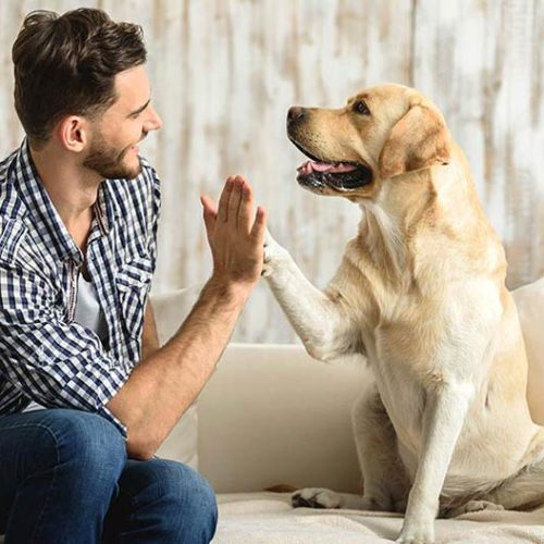 Some Dogs Cooperate With Humans More Than Others